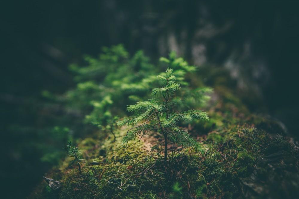 restauración bosques incendiados