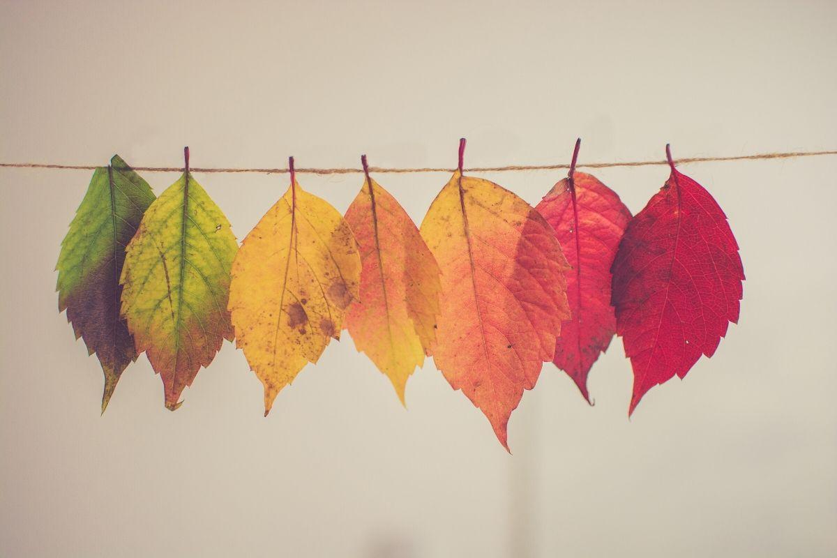 noviembre marcas sostenibles